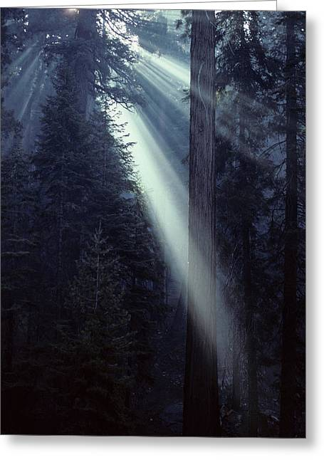 Usa, California, Sun, Smoke, Forest Greeting Card