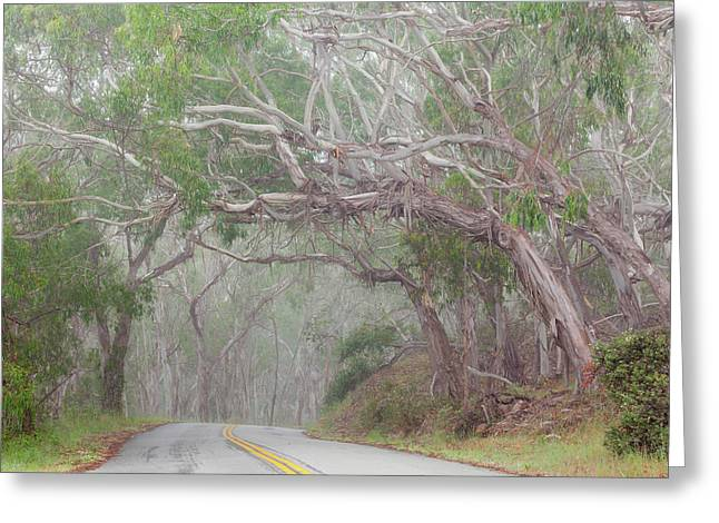 Usa, California Tree-lined Road Greeting Card by Jaynes Gallery