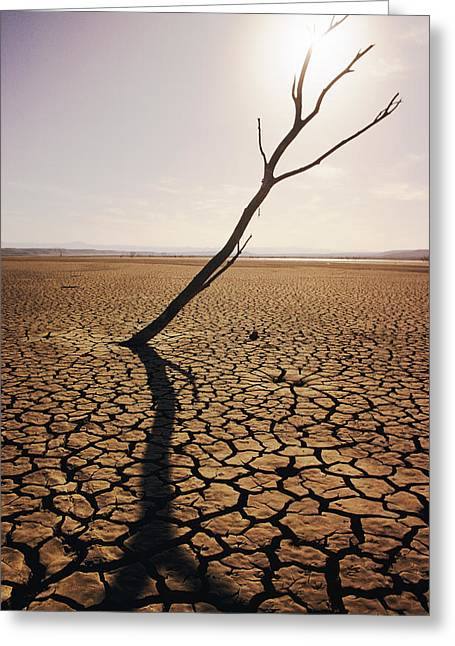 Usa, California, Tree Snag And Cracked Greeting Card by Larry Dale Gordon