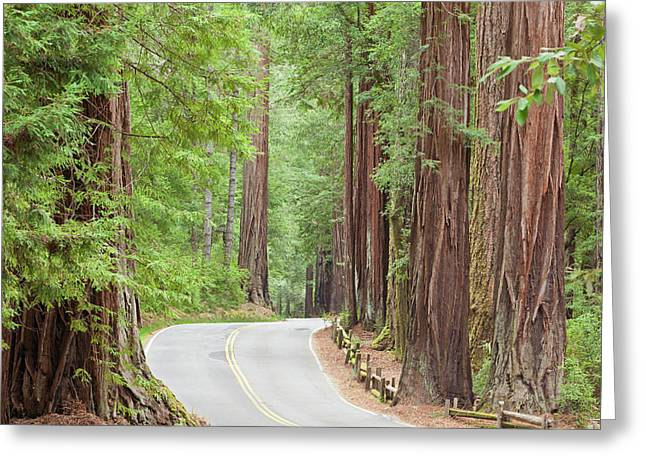 Usa, California View Of Road Greeting Card by Jaynes Gallery