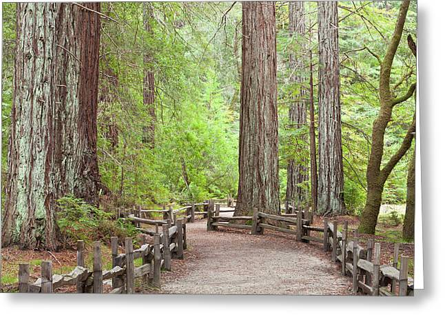 Usa, California View Of Trail Greeting Card