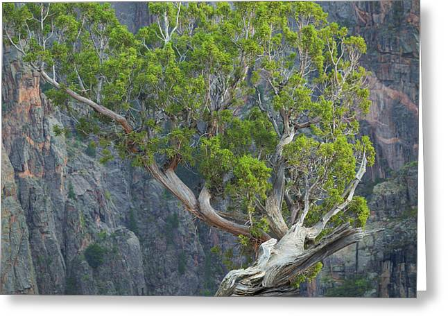 Usa, Colorado, Gunnison National Park Greeting Card by Jaynes Gallery