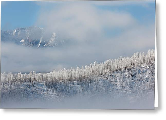 Usa, Colorado Hoarfrost Coats The Trees Greeting Card by Jaynes Gallery