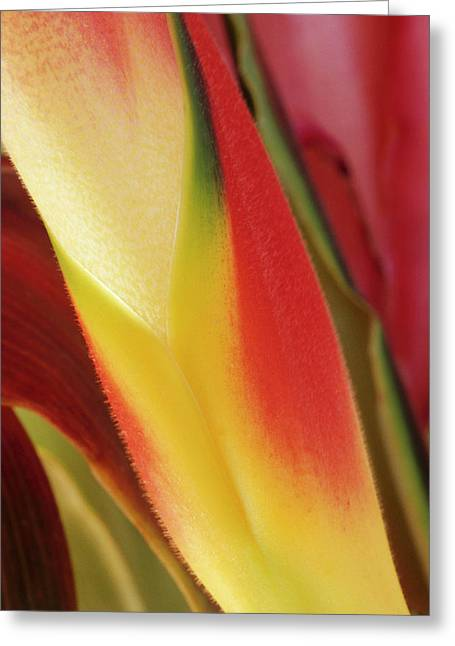 Usa, Colorado, Lafayette, Heliconia Greeting Card
