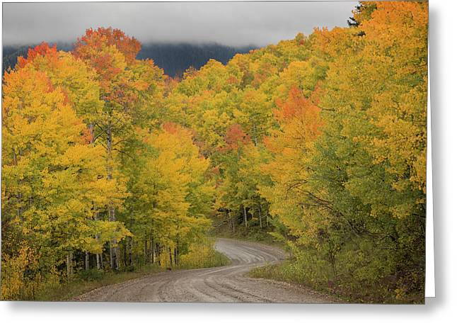 Usa, Colorado, San Juan National Forest Greeting Card by Jaynes Gallery