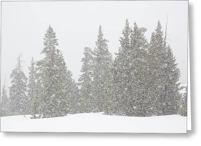 Usa, Colorado Summer Snowstorm Greeting Card by Jaynes Gallery