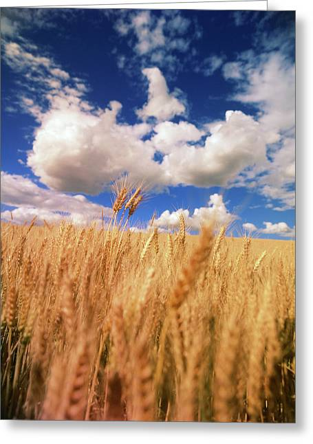 Usa, Eastern Washington, Palouse Area Greeting Card