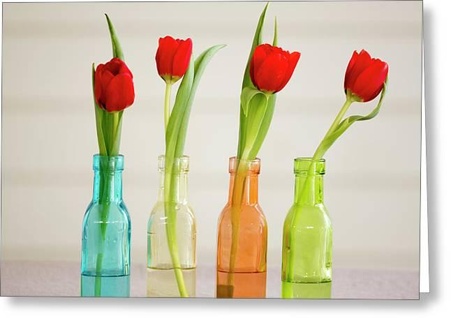 Usa, Florida, Celebration, Tulips Greeting Card