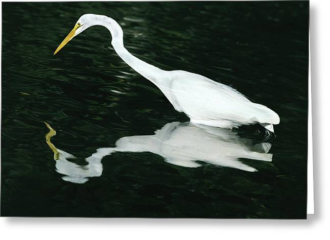 Usa, Florida, Ding Darling National Greeting Card by Jaynes Gallery