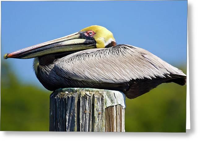 Usa, Florida, Everglades City, Big Greeting Card