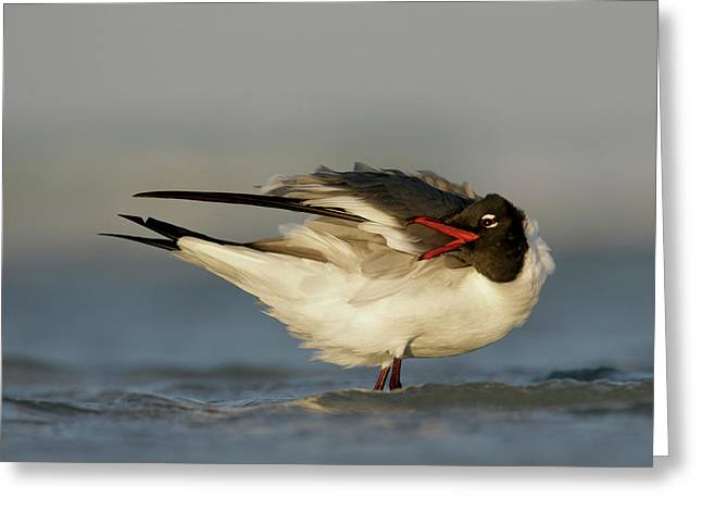 Usa, Florida, Fort De Soto Park, Mullet Greeting Card