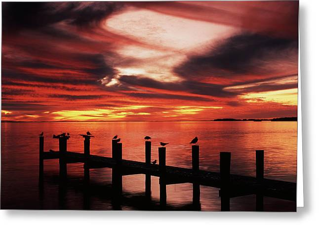 Usa, Florida, Fort Meyers, Silhouetted Greeting Card by Adam Jones