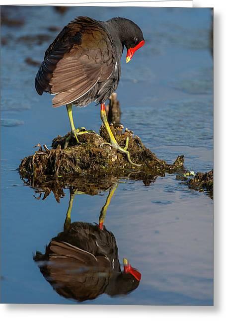 Usa, Florida, Green Cay, Wakodahatchee Greeting Card by Jaynes Gallery
