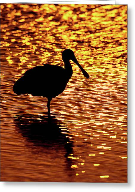 Usa, Florida, Vierra Wetlands Greeting Card