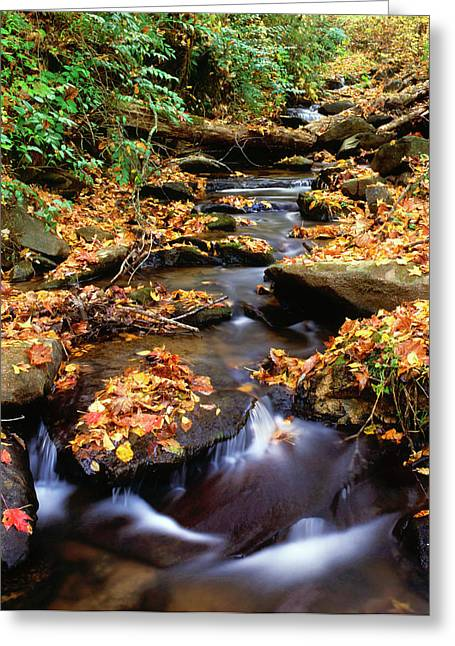 Usa, Georgia, Cherokee National Forest Greeting Card by Jaynes Gallery