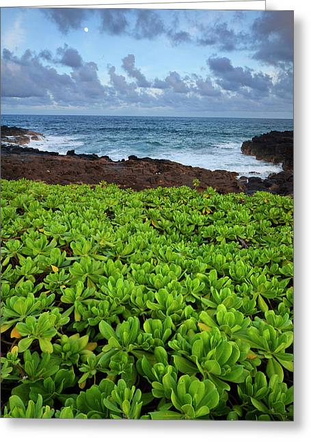 Usa, Hawaii, Kauai, Poipu Greeting Card by Jaynes Gallery