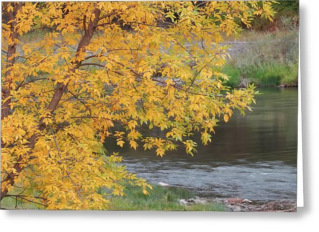 Usa, Idaho, Salmon River, Fall Greeting Card
