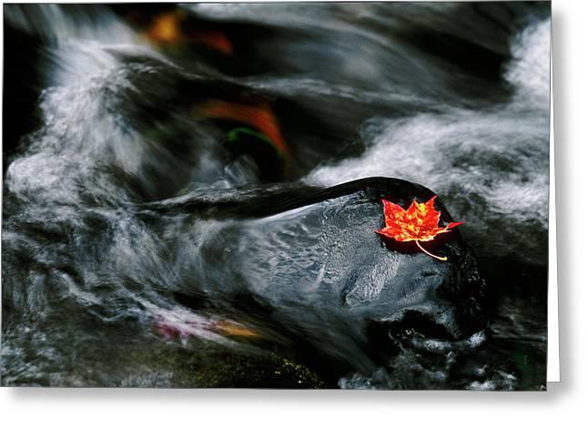 Usa, Maine Maple Leaf On Black Rock Greeting Card