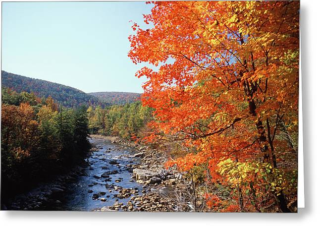 Usa, Maryland, Potomac State Forest Greeting Card