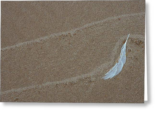Usa, Michigan, Gull Feather And Wave Greeting Card
