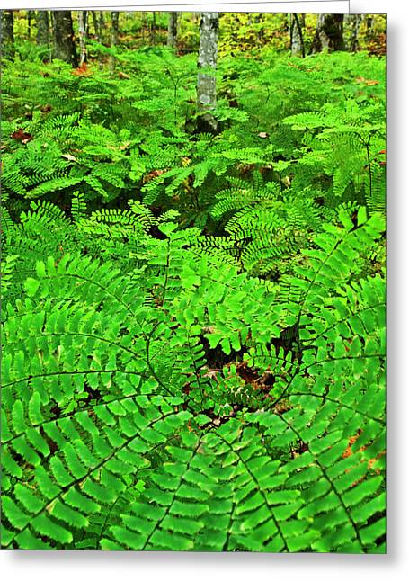 Usa, Michigan Maiden Hair Fern Greeting Card by Jaynes Gallery