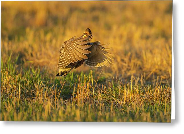 Usa, Nebraska, Sand Hills Greeting Card
