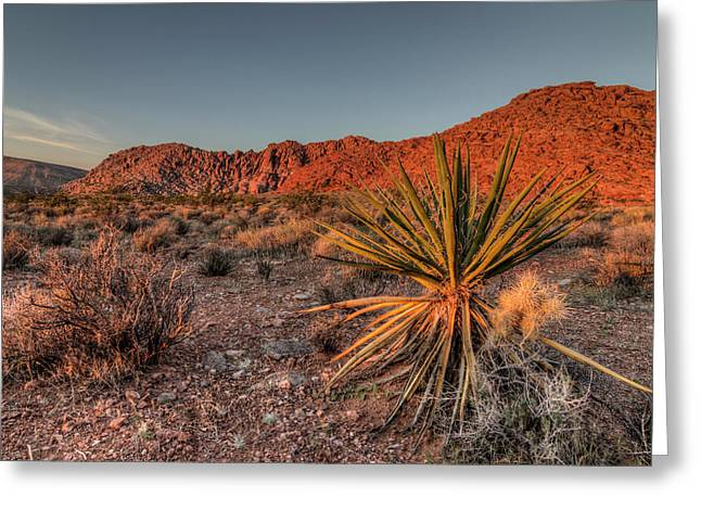 Usa, Nevada Red Rock Canyon National Greeting Card by Brent Bergherm