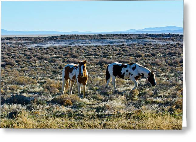 Usa, Nevada, Wild Horses Grazing Greeting Card by Bernard Friel