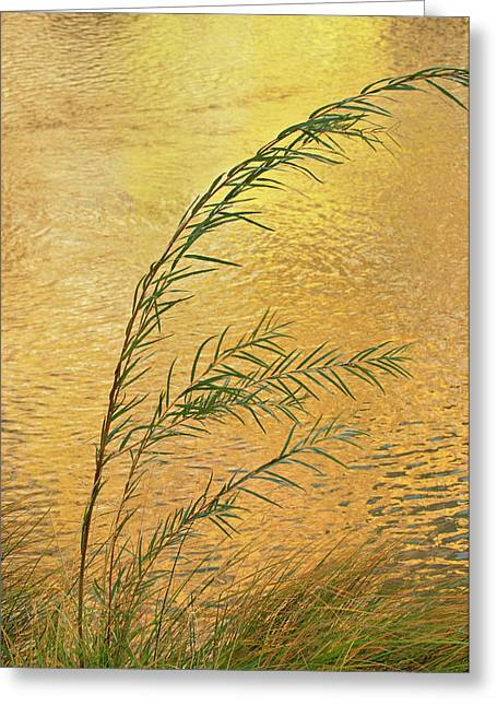 Usa, New Mexico Grass And Sky Greeting Card by Jaynes Gallery