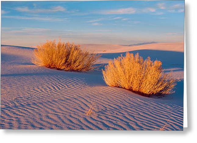 Usa, New Mexico, White Sands, Sunset Greeting Card by Panoramic Images