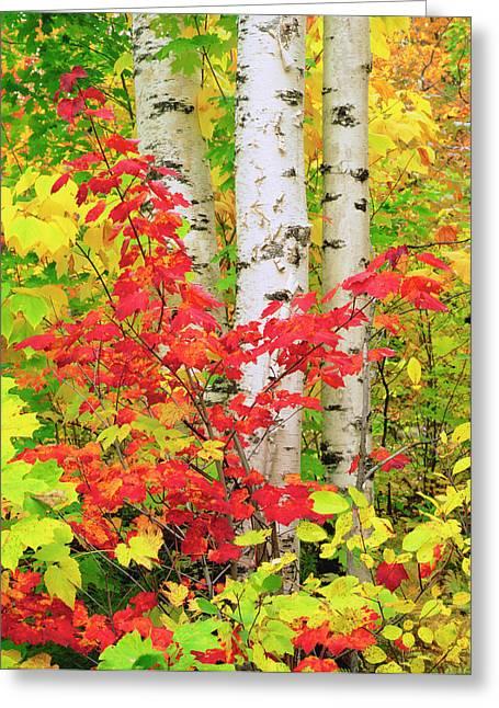 Usa, New York, Adirondack Park, Autumn Greeting Card by Jaynes Gallery