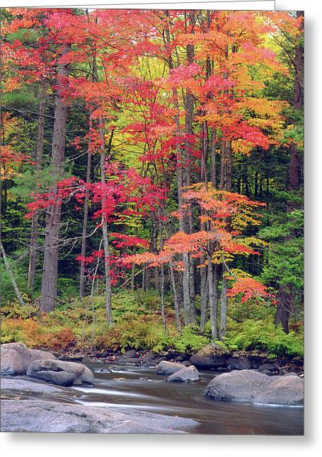 Usa, New York, Autumn In The Adirondack Greeting Card