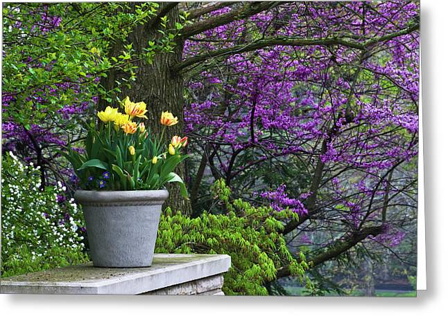 Usa, Ohio Potted Tulips And Redbud Tree Greeting Card by Jaynes Gallery