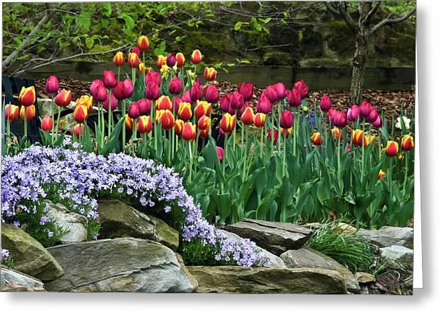 Usa, Ohio Tulips And Phlox Greeting Card