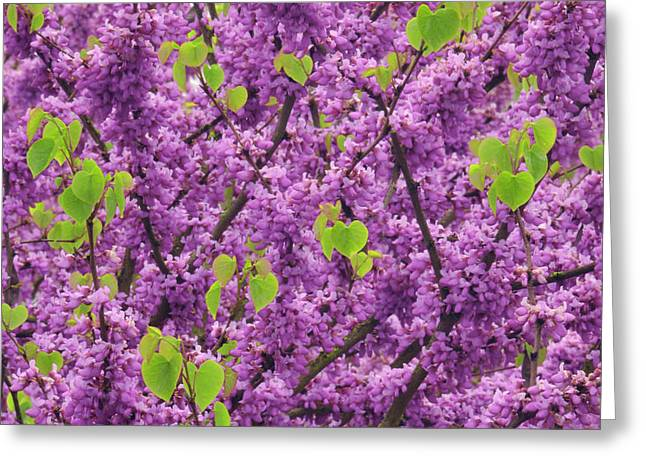 Usa, Oregon Blossoms And New Growth Greeting Card by Jaynes Gallery