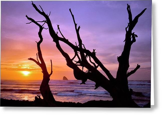 Usa, Oregon, Cape Meares Greeting Card by Jaynes Gallery