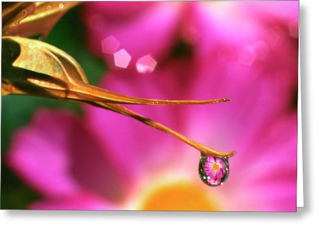 Usa, Oregon, Close-up Of Cosmos Flower Greeting Card by Jaynes Gallery