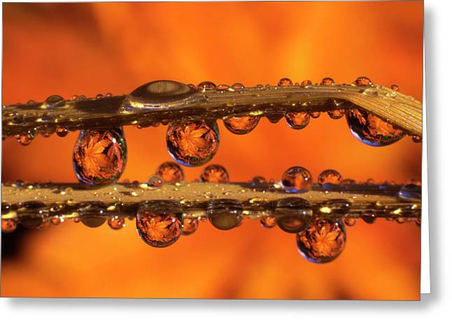 Usa, Oregon, Close-up Of Dewdrops Greeting Card