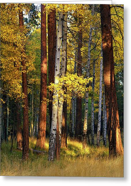 Usa, Oregon, Deschutes National Forest Greeting Card by Jaynes Gallery