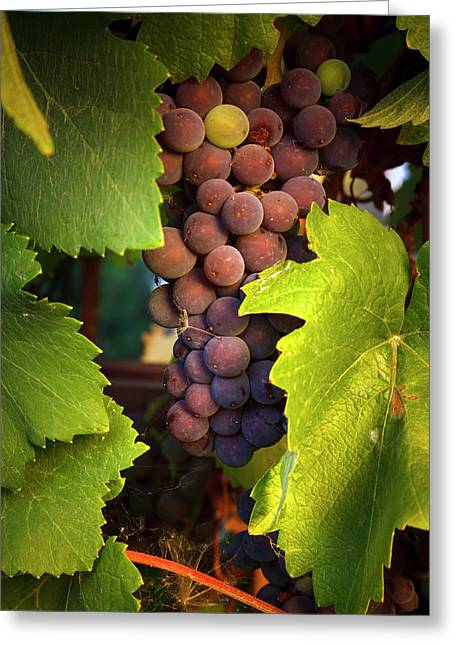 Usa, Oregon, Keizer, Pinot Gris Grapes Greeting Card