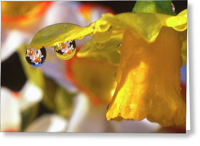 Usa, Oregon, Multnomah County, Close-up Greeting Card by Jaynes Gallery