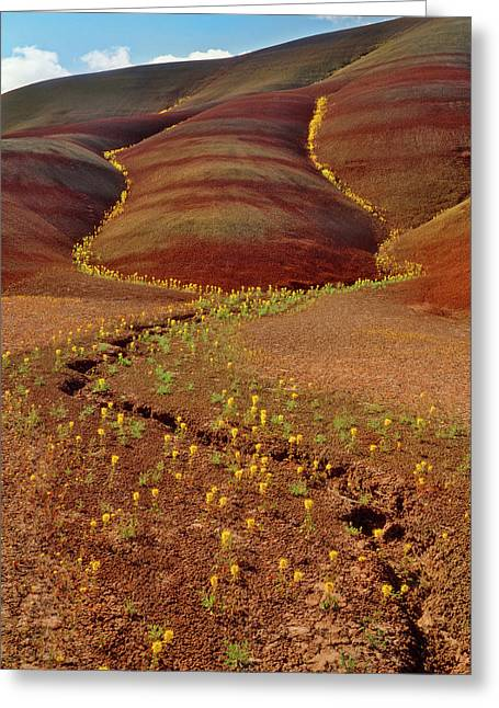 Usa, Oregon, Painted Hills In John Day Greeting Card by Jaynes Gallery