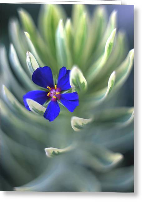 Usa, Oregon, Portland, Close-up Of Blue Greeting Card by Jaynes Gallery