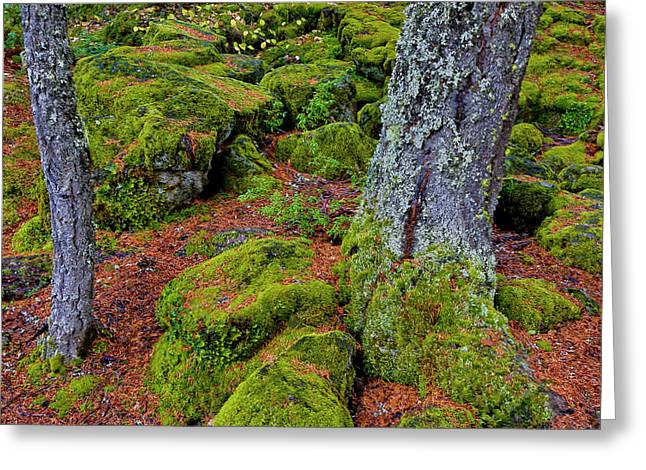 Usa, Oregon, Rogue River Wilderness Greeting Card