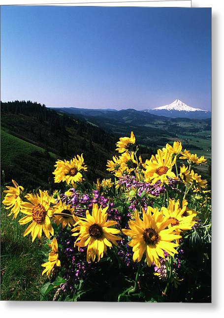Usa, Oregon, View Of Blue-pod Lupine Greeting Card by Stuart Westmorland