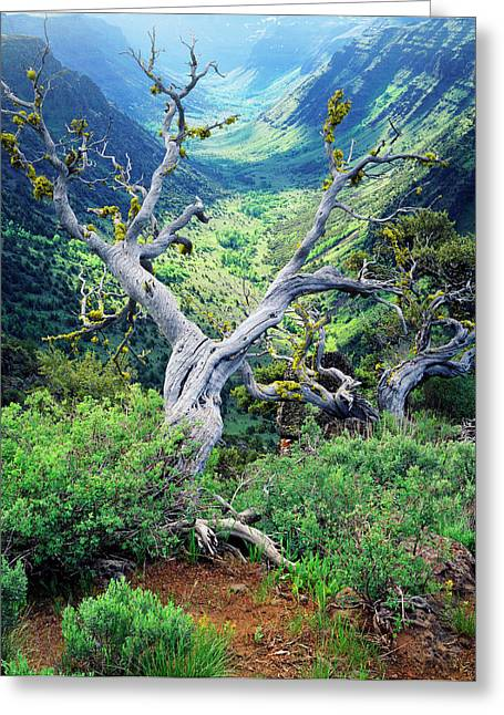 Usa, Oregon, View Of Steens Mountain Greeting Card by Scott T. Smith