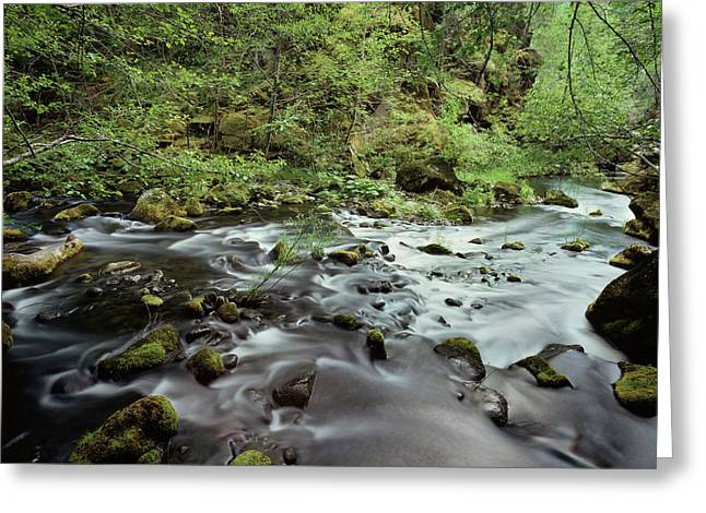 Usa, Pacific Northwest, A Stream Flows Greeting Card by Christopher Talbot Frank