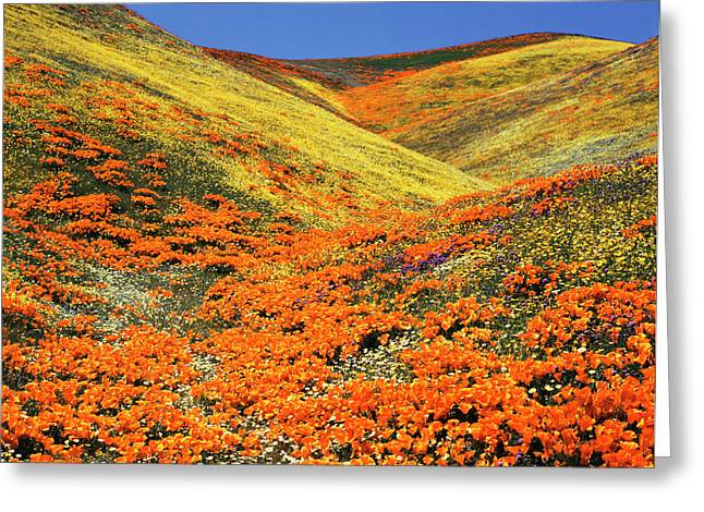 Usa, Southern California, View Greeting Card by Stuart Westmorland