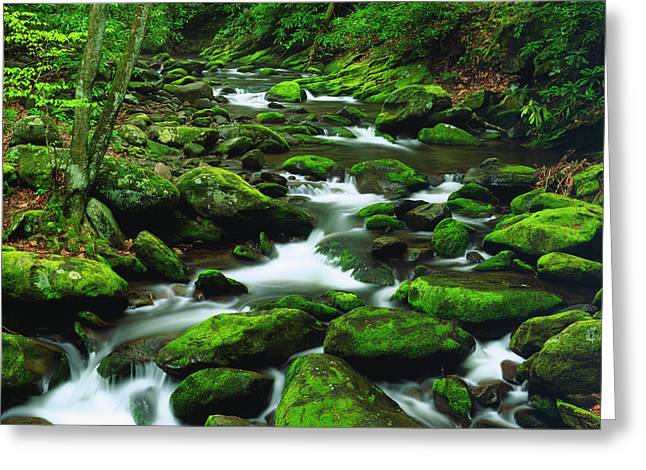 Usa, Tennessee, A Moss Covered Stream Greeting Card
