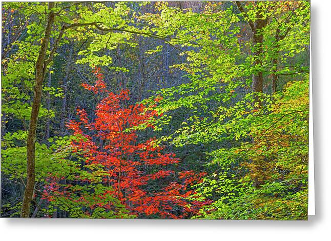 Usa, Tennessee Autumn Foliage Greeting Card by Jaynes Gallery